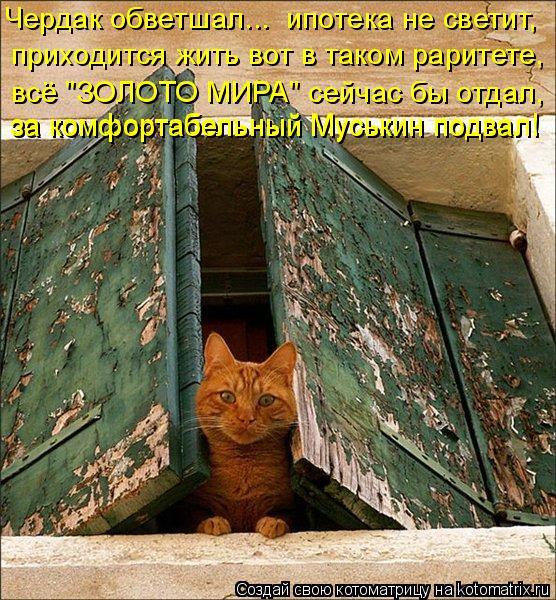 """Котоматрица: Чердак обветшал...  ипотека не светит, приходится жить вот в таком раритете, всё """"ЗОЛОТО МИРА"""" сейчас бы отдал, за комфортабельный Муськин под"""
