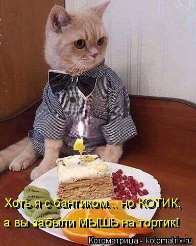 Котоматрица: Хоть я с бантиком... но КОТИК, Хоть я с бантиком... но КОТИК, а вы забыли МЫШЬ на тортик! а вы забыли МЫШЬ на тортик!
