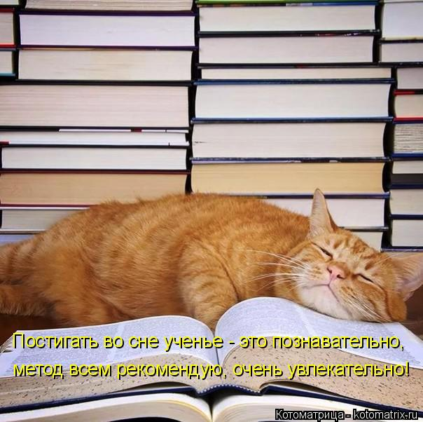 Котоматрица: Постигать во сне ученье - это познавательно, метод всем рекомендую, очень увлекательно!