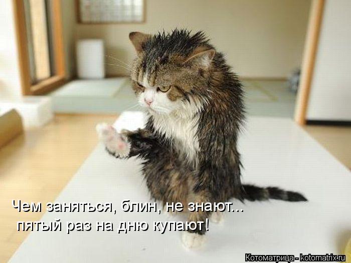 Котоматрица: Чем заняться, блин, не знают... пятый раз на дню купают!