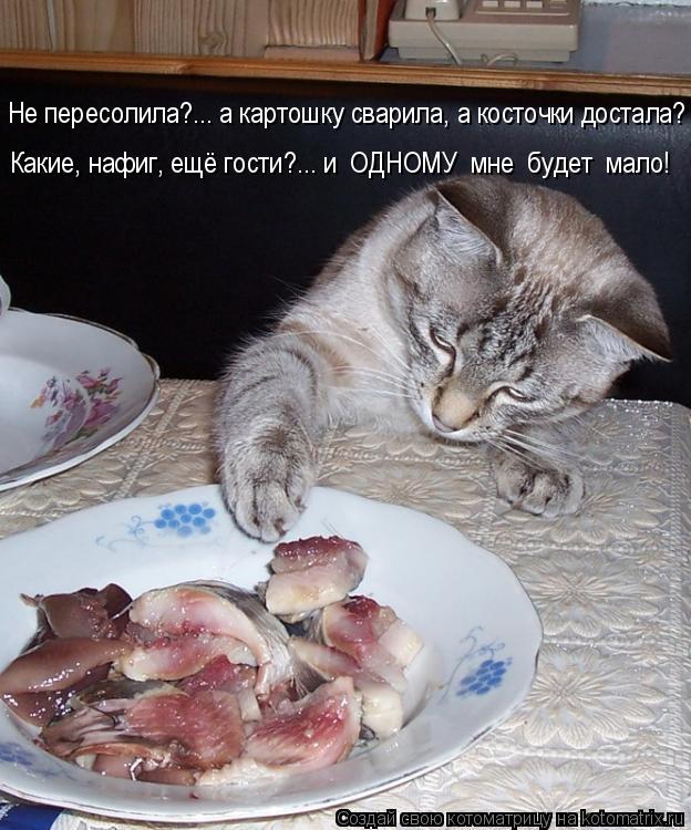 Котоматрица: Не пересолила?... а картошку сварила, а косточки достала? Какие, нафиг, ещё гости?... и  ОДНОМУ  мне  будет  мало!