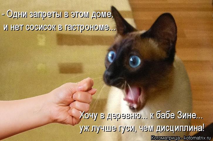 Котоматрица: - Одни запреты в этом доме, и нет сосисок в гастрономе... Хочу в деревню... к бабе Зине... уж лучше гуси, чем дисциплина!