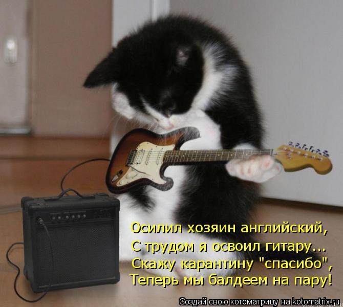 """Котоматрица: Осилил хозяин английский, С трудом я освоил гитару... Скажу карантину """"спасибо"""", Теперь мы балдеем на пару!"""