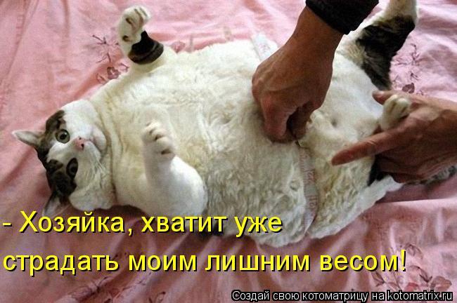 Котоматрица: - Хозяйка, хватит уже страдать моим лишним весом!