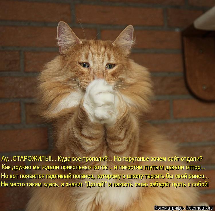 Котоматрица: Ау...СТАРОЖИЛЫ!... Куда все пропали?... На поруганье зачем сайт отдали? Как дружно мы ждали прикольных котов... и пакостям глупым давали отпор... ?