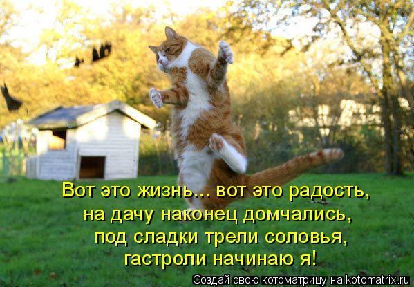 Котоматрица: Вот это жизнь... вот это радость, на дачу наконец домчались, под сладки трели соловья, гастроли начинаю я!