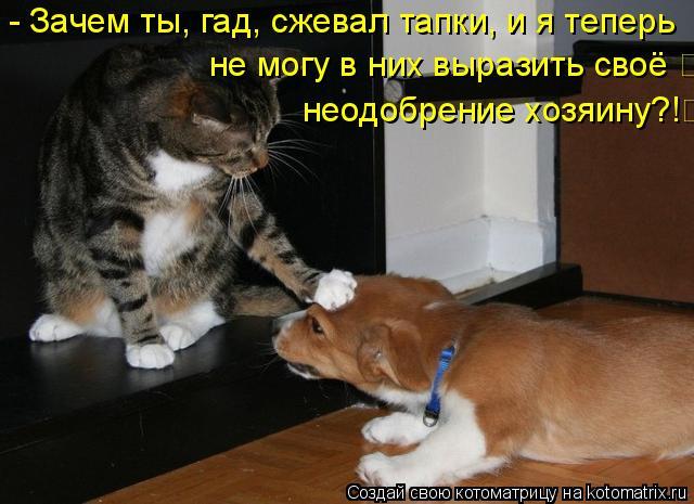 Котоматрица: - Зачем ты, гад, сжевал тапки, и я теперь не могу в них выразить своё  неодобрение хозяину?!