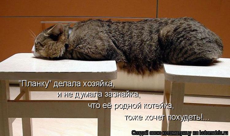 """Котоматрица: """"Планку"""" делала хозяйка, и не думала зазнайка, что её родной котейка, тоже хочет похудеть!..."""