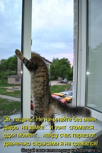Котоматрица: Эй, пацаны! Не начинайте без меня, дверь  на замке... и зонт  сломался... один момент... найду счас парашют, давненько с крысами я не сражался!