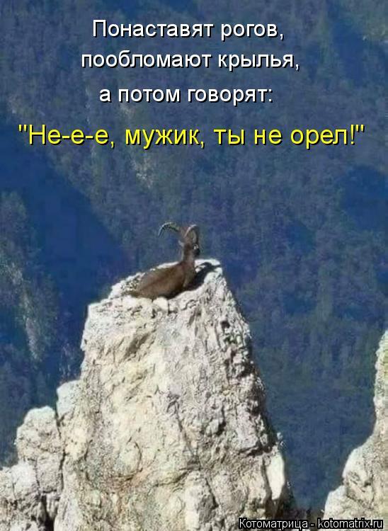 """Котоматрица: Понаставят рогов, пообломают крылья,  а потом говорят: """"Не-е-е, мужик, ты не орел!"""""""