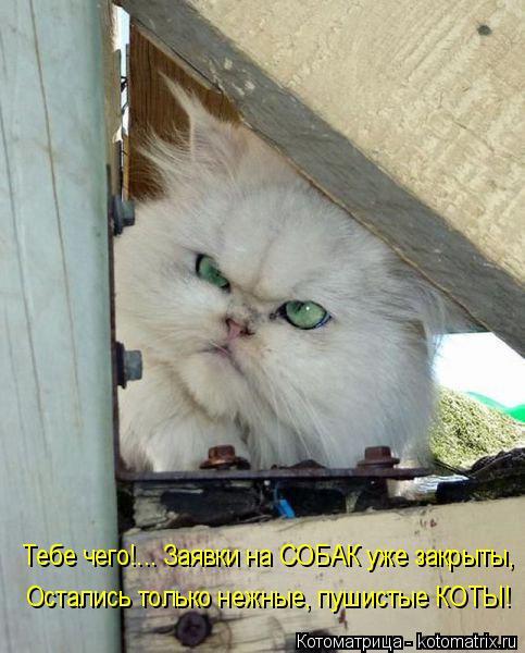 Котоматрица: Тебе чего!... Заявки на СОБАК уже закрыты, Остались только нежные, пушистые КОТЫ!