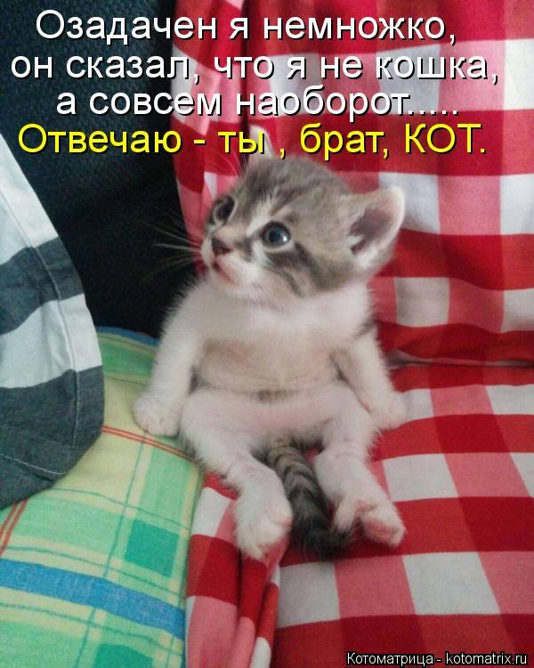 Котоматрица: Озадачен я немножко, он сказал, что я не кошка, а совсем наоборот..... Отвечаю - ты , брат, КОТ.