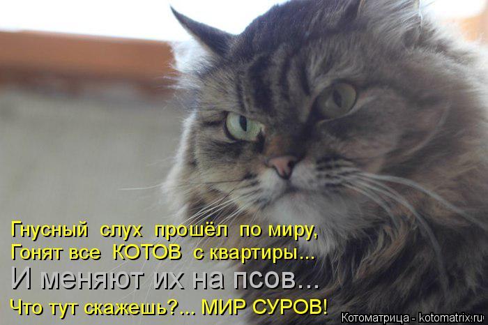 Котоматрица: Гнусный  слух  прошёл  по миру, Гонят все  КОТОВ  с квартиры... И меняют их на псов... Что тут скажешь?... МИР СУРОВ!