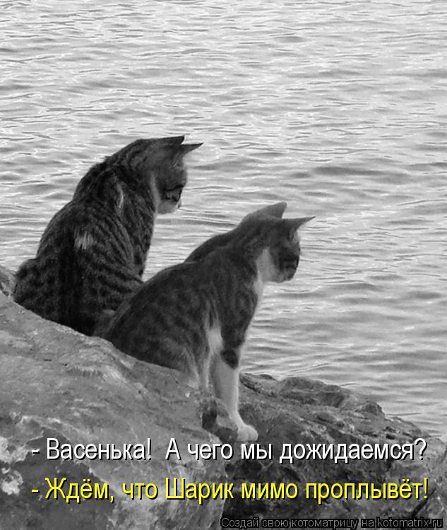 Котоматрица: - Васенька!  А чего мы дожидаемся? - Ждём, что Шарик мимо проплывёт!