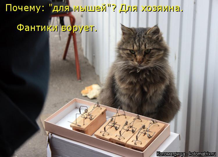 """Котоматрица: Фантики ворует. Почему: """"для мышей""""? Для хозяина."""