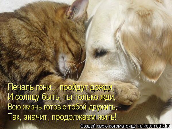 Котоматрица: Печаль гони... пройдут дожди, И солнцу быть, ты только жди, Всю жизнь готов с тобой дружить, Так, значит, продолжаем жить!
