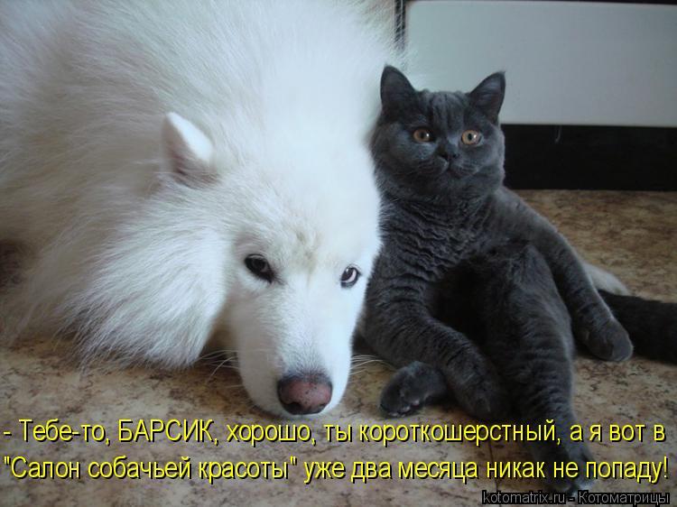 """Котоматрица: - Тебе-то, БАРСИК, хорошо, ты короткошерстный, а я вот в """"Салон собачьей красоты"""" уже два месяца никак не попаду!"""
