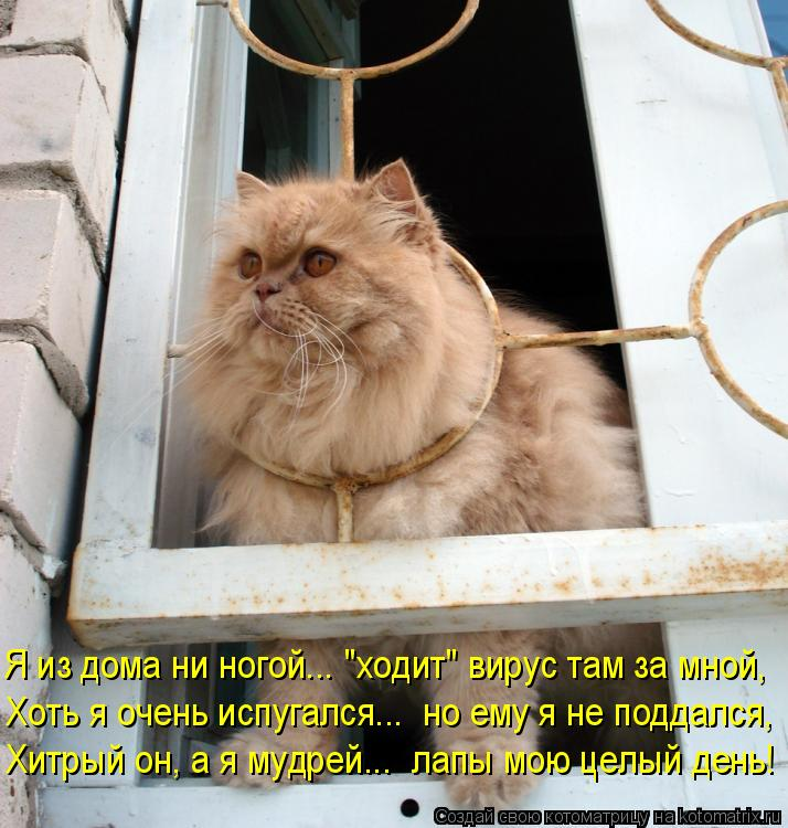 """Котоматрица: Я из дома ни ногой... """"ходит"""" вирус там за мной, Хоть я очень испугался...  но ему я не поддался, Хитрый он, а я мудрей...  лапы мою целый день!"""