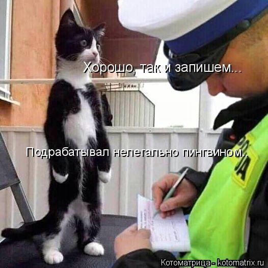 Котоматрица: Хорошо, так и запишем...   Подрабатывал нелегально пингвином..
