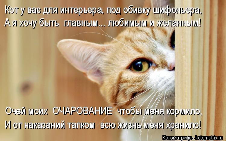 Котоматрица: Кот у вас для интерьера, под обивку шифоньера, А я хочу быть  главным... любимым и желанным! Очей моих  ОЧАРОВАНИЕ  чтобы меня кормило, И от нак?
