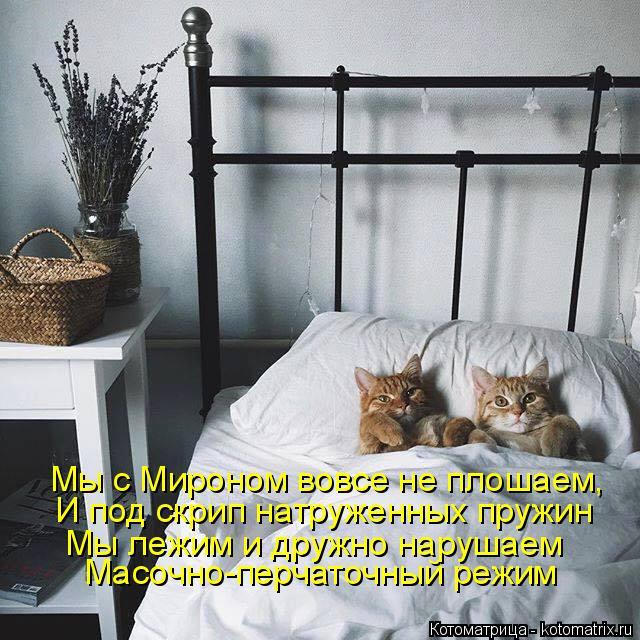Котоматрица: Мы с Мироном вовсе не плошаем,  И под скрип натруженных пружин Мы лежим и дружно нарушаем Масочно-перчаточный режим