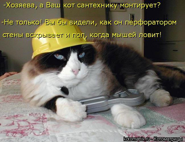 Котоматрица: -Хозяева, а Ваш кот сантехнику монтирует? -Не только! Вы бы видели, как он перфоратором  стены вскрывает и пол, когда мышей ловит!