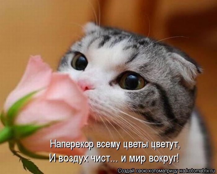 Котоматрица: Наперекор всему цветы цветут, И воздух чист... и мир вокруг!