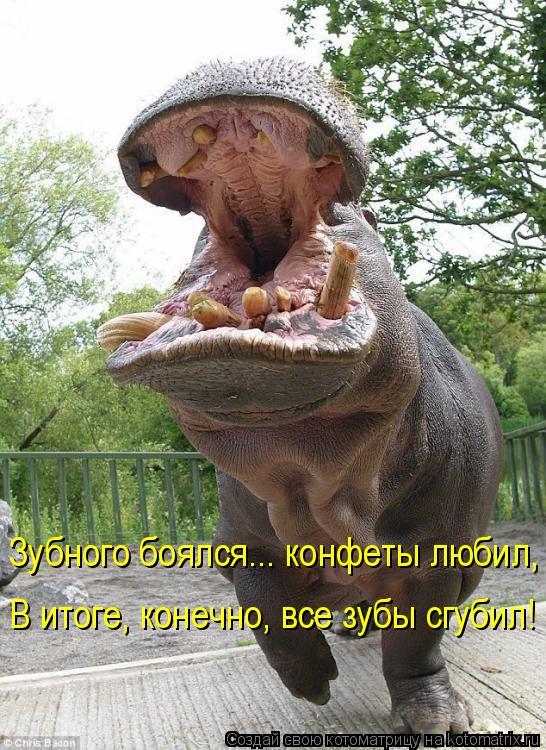 Котоматрица: Зубного боялся... конфеты любил, В итоге, конечно, все зубы сгубил!