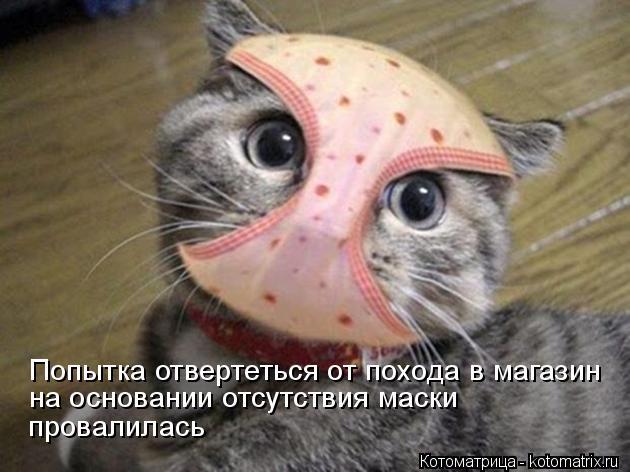 Котоматрица: Попытка отвертеться от похода в магазин на основании отсутствия маски провалилась