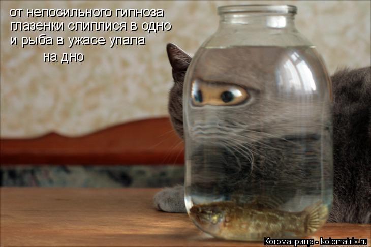Котоматрица: от непосильного гипноза глазенки слиплися в одно и рыба в ужасе упала на дно