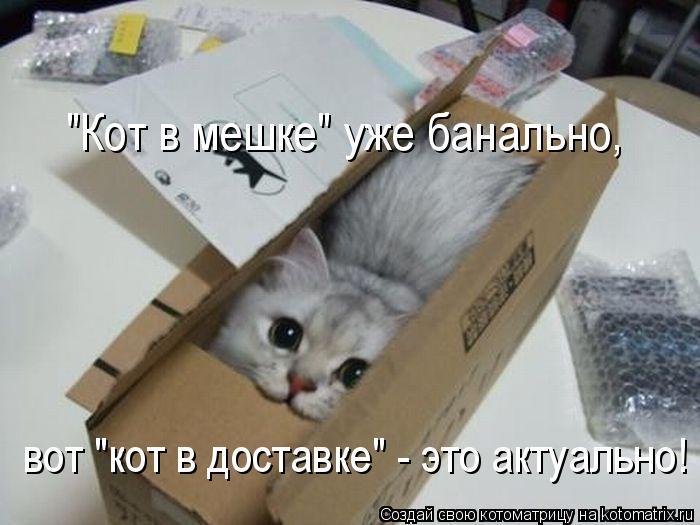 """Котоматрица: """"Кот в мешке"""" уже банально, вот """"кот в доставке"""" - это актуально!"""