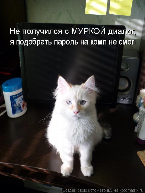 Котоматрица: Не получился с МУРКОЙ диалог, я подобрать пароль на комп не смог!