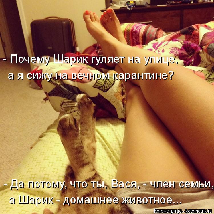 Котоматрица: - Почему Шарик гуляет на улице,  а я сижу на вечном карантине?  - Да потому, что ты, Вася, - член семьи,  а Шарик - домашнее животное...