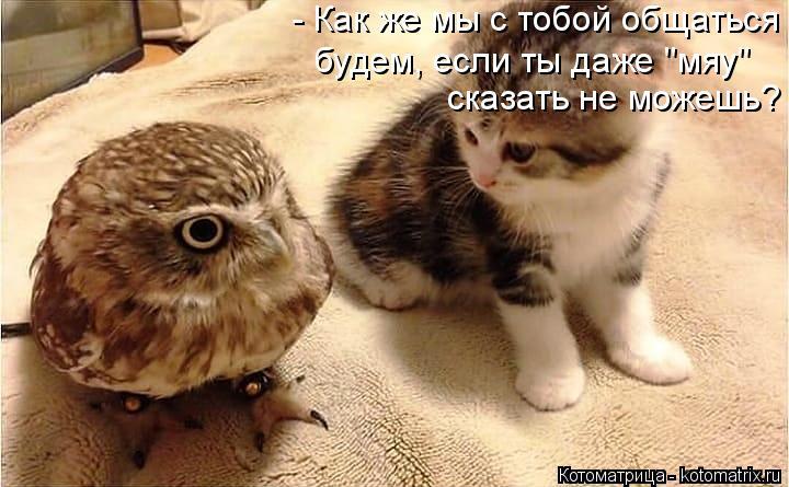 """Котоматрица: - Как же мы с тобой общаться будем, если ты даже """"мяу""""  сказать не можешь?"""