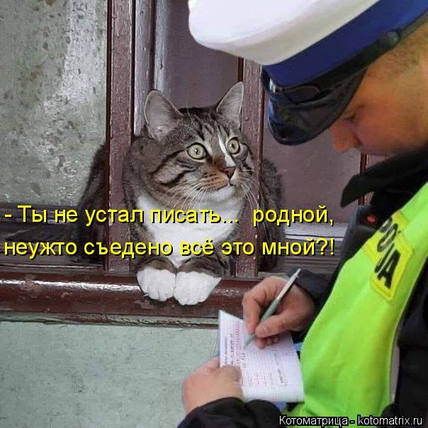 Котоматрица: - Ты не устал писать...  родной, неужто съедено всё это мной?!