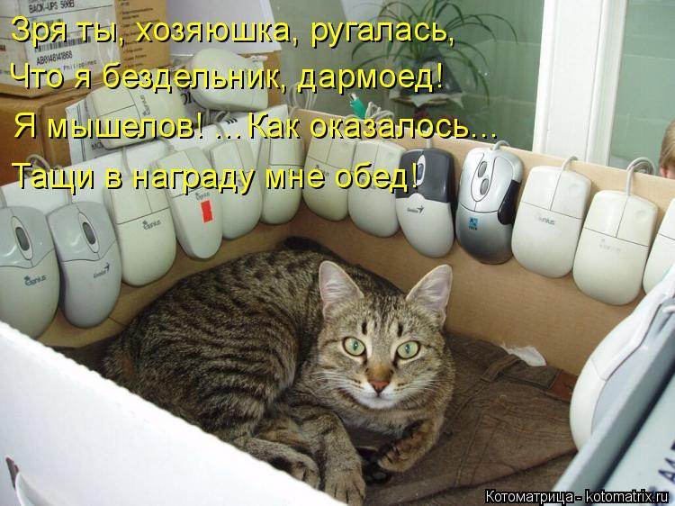 Котоматрица: Зря ты, хозяюшка, ругалась, Что я бездельник, дармоед! Я мышелов! …Как оказалось… Тащи в награду мне обед!