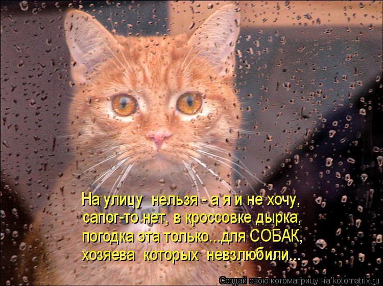 Котоматрица: На улицу  нельзя - а я и не хочу, сапог-то нет, в кроссовке дырка, погодка эта только...для СОБАК,  хозяева  которых  невзлюбили...