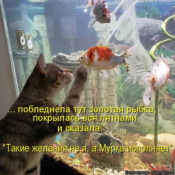 """Котоматрица: ... побледнела тут золотая рыбка,  покрылась вся пятнами  и сказала: """"Такие желания не я, а Мурка исполняет"""""""