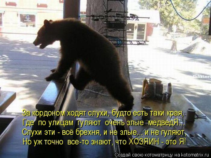 Котоматрица: За кордоном ходят слухи, будто есть таки края, Где  по улицам  гуляют  очень злые  медведЯ... Слухи эти - всё брехня, и не злые... и не гуляют, Но у?
