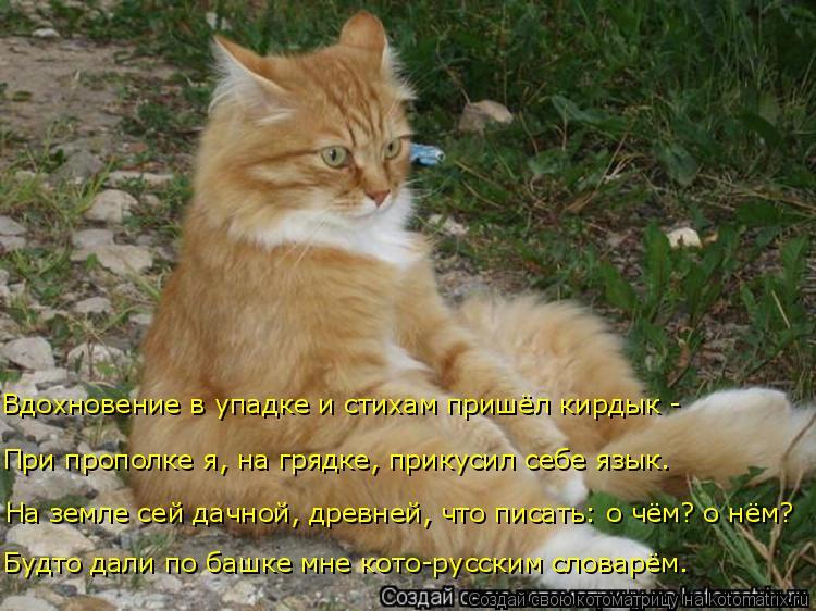 Котоматрица: Будто дали по башке мне кото-русским словарём. На земле сей дачной, древней, что писать: о чём? о нём? При прополке я, на грядке, прикусил себе ?