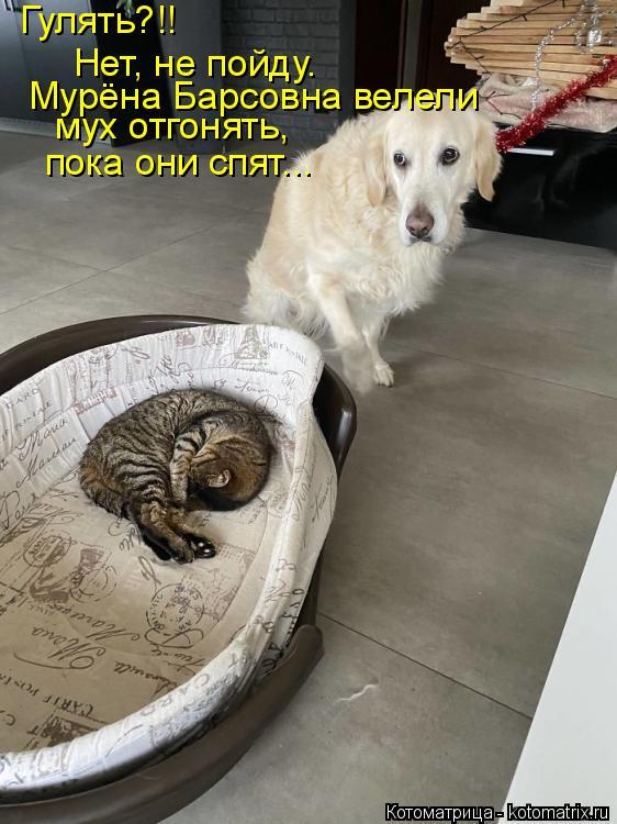 Котоматрица: Гулять?!! Нет, не пойду.  Мурёна Барсовна велели мух отгонять,  пока они спят...