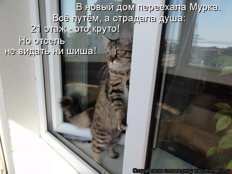 Котоматрица: 21 этаж - это круто! Всё путём, а страдала душа: В новый дом переехала Мурка. Но отсель не видать ни шиша!
