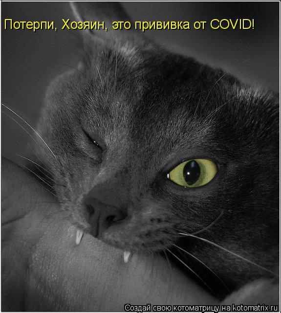 Котоматрица: Потерпи, Хозяин, это прививка от COVID!