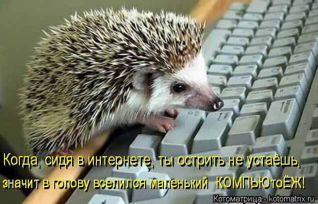 Котоматрица: Когда, сидя в интернете, ты острить не устаёшь, значит в голову вселился маленький  КОМПЬЮтоЁЖ! значит в голову вселился маленький  КОМПЬЮто