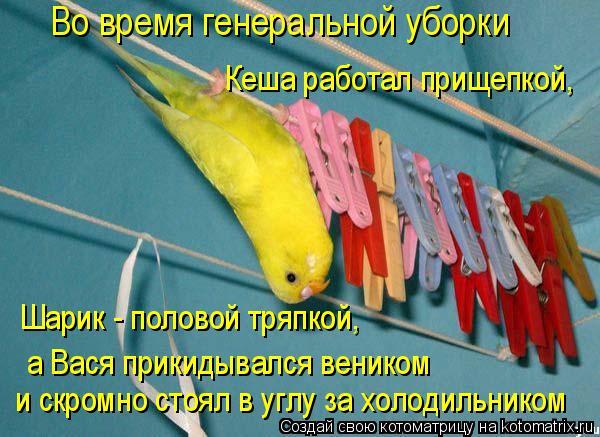 Котоматрица: Во время генеральной уборки Кеша работал прищепкой,  Шарик - половой тряпкой,  а Вася прикидывался веником и скромно стоял в углу за холодил?
