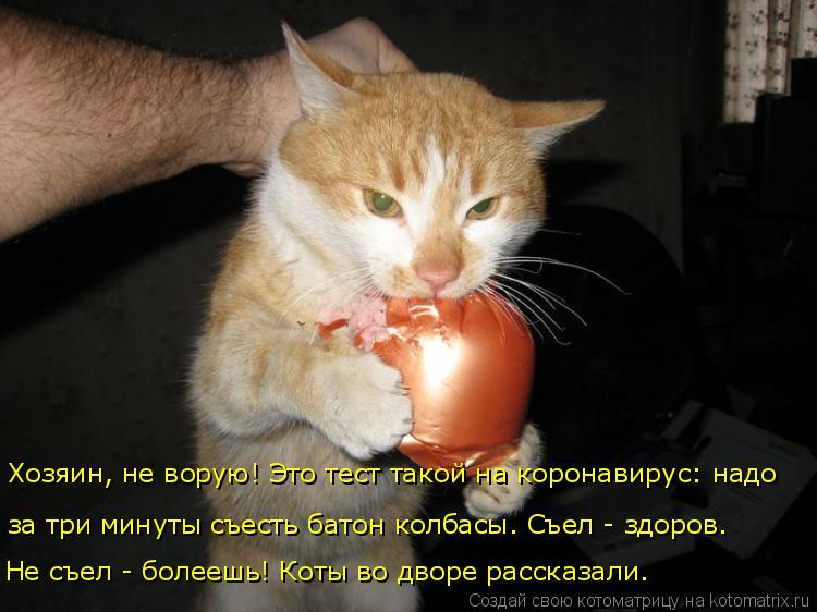 Котоматрица: Хозяин, не ворую! Это тест такой на коронавирус: надо  за три минуты съесть батон колбасы. Съел - здоров.  Не съел - болеешь! Коты во дворе расск