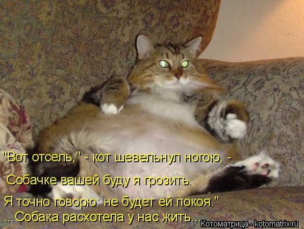"""Котоматрица: """"Вот отсель,"""" - кот шевельнул ногою, - Собачке вашей буду я грозить. Я точно говорю: не будет ей покоя."""" ...Собака расхотела у нас жить..."""