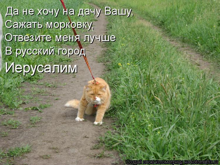 Котоматрица: Да не хочу на дачу Вашу, Сажать морковку,  Отвезите меня лучше  В русский город  Иерусалим
