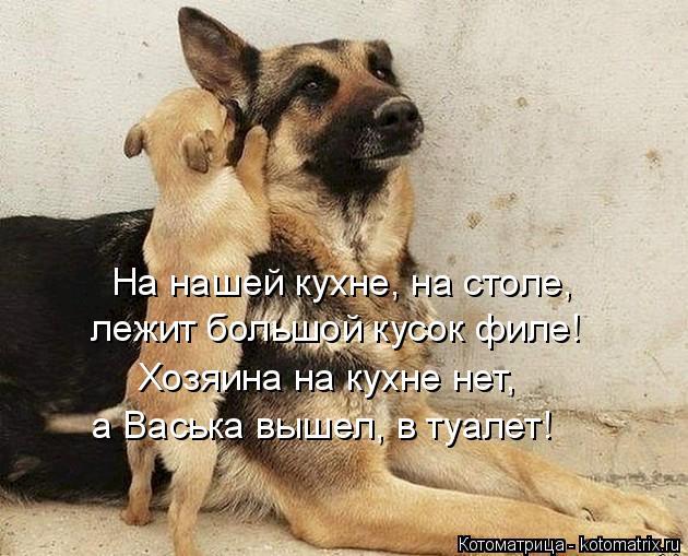 Котоматрица: На нашей кухне, на столе, лежит большой кусок филе! Хозяина на кухне нет, а Васька вышел, в туалет!