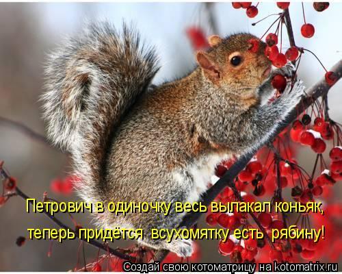 Котоматрица: Петрович в одиночку весь вылакал коньяк, теперь придётся  всухомятку есть  рябину!
